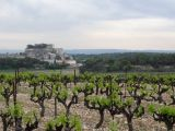 Vineyards infront of the old village of Grignan