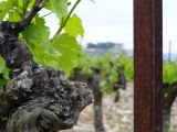 Vineyards of the Drôme region