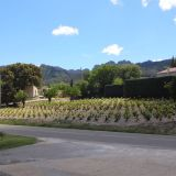 Vineyards at the foot of the mountains