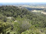 View of the vegetation on the Dentelles de Montmirail