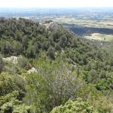 View of the vegetation on the Dentelles de Montmirail