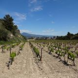 Vineyards within the Dentelles de Montmirail