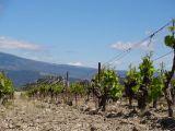 Vineyards within the Dentelles de Montmirail