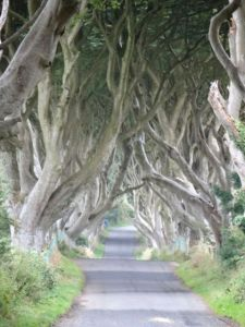 A rare, no-person shot of the Dark Hedges