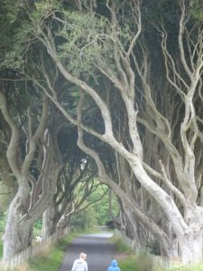 The height of the Dark Hedges